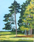 tree, river, walk path
