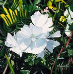 flower, white flower