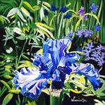flower, iris, purple flower