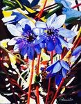 Flower, Anemone Hepatica