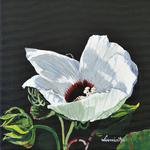 white poppy, poppy, flower