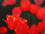 red, tulip, tulips, flower