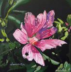pink, flower, dew