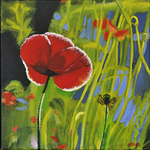 poppy, flower
