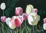 tulips, flower