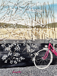 spring, flowering tree, bike, Lyon