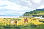 river, bay, horses, quebec, canada