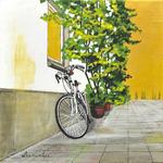 bicycle, stucco wall, stucco, wall, vine, golden sky