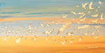 seaguls, birds