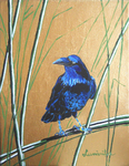 raven, crow, bird