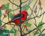 scarlet Tanager, bird