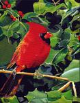 cardinal, bird