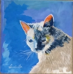 Siamese, Tonkenise, cat