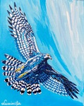 Goshawk, hawk, Lake of the Woods